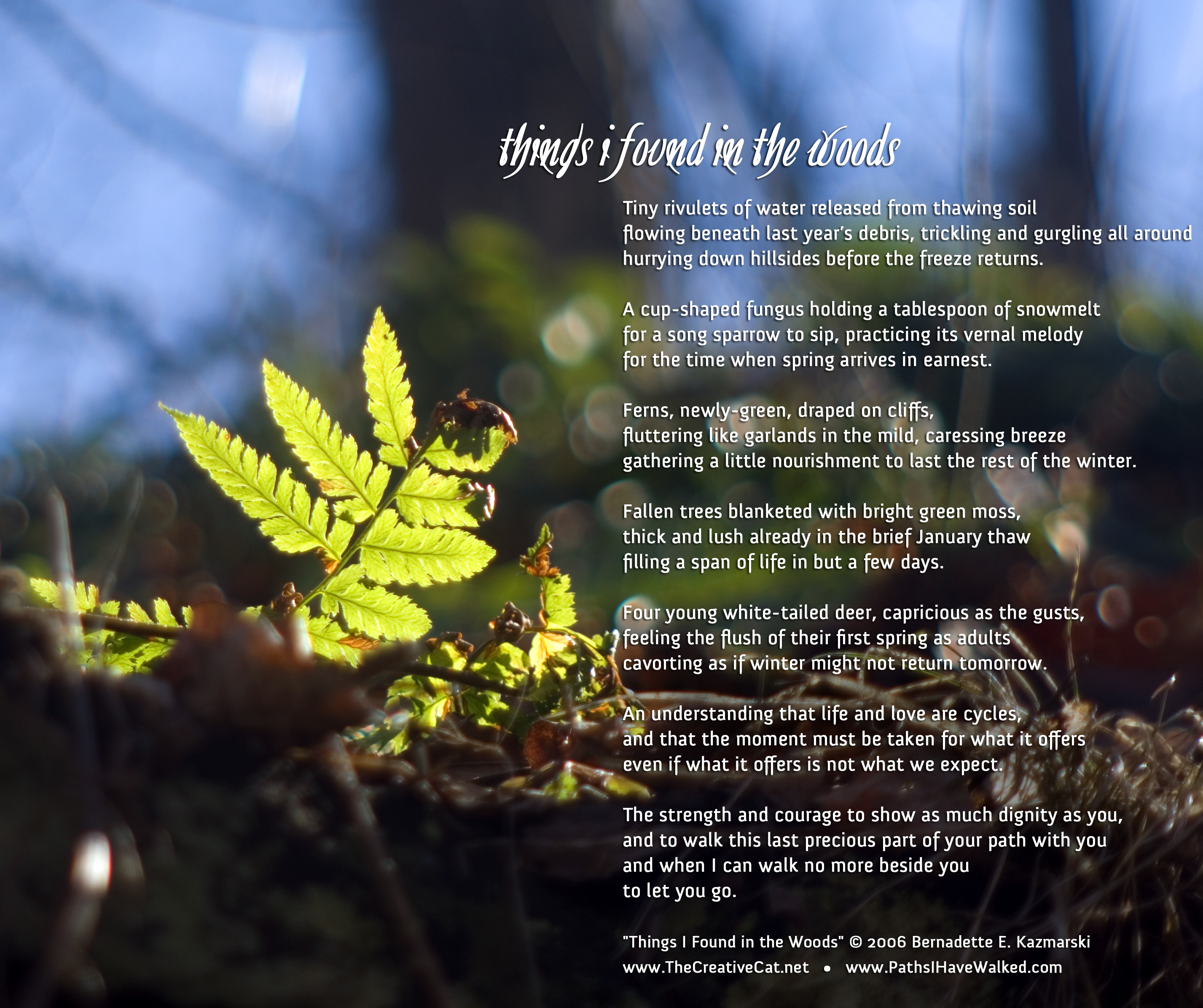 """Things I Found in the Woods"", image and words."
