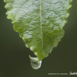 070117-Droplet-rev