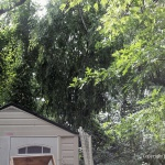 The distance the branch spanned, from the shed to the house.