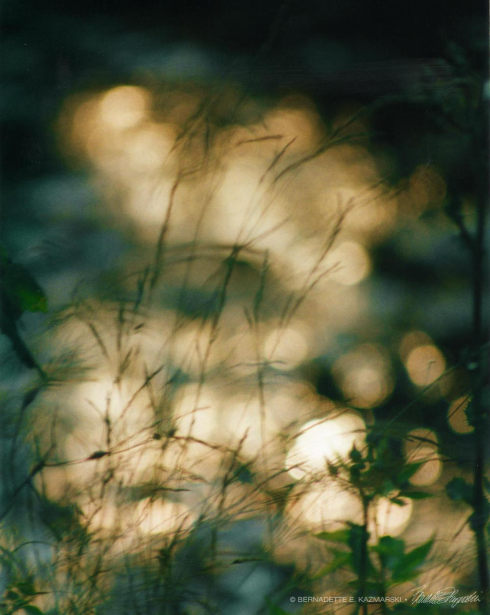 Grasses and Sparkles
