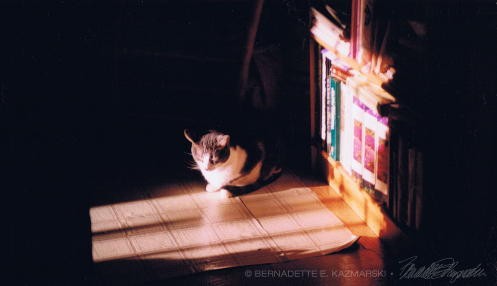 """Reference photo for """"Warm Winter Sun""""."""