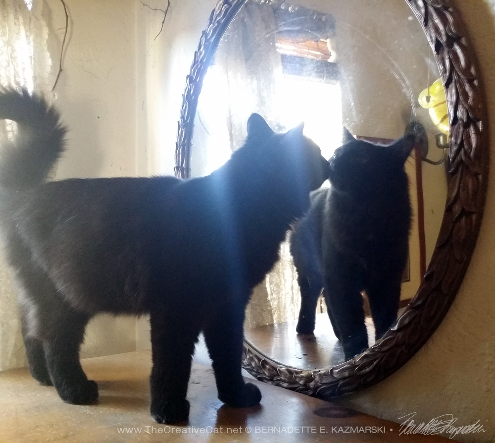 kitten looking in mirror