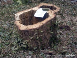 A planter made from a tree trunk!