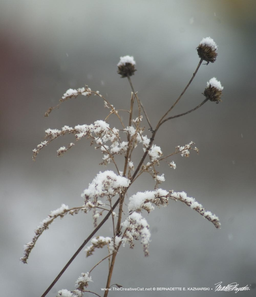 dried wildflowers with snow